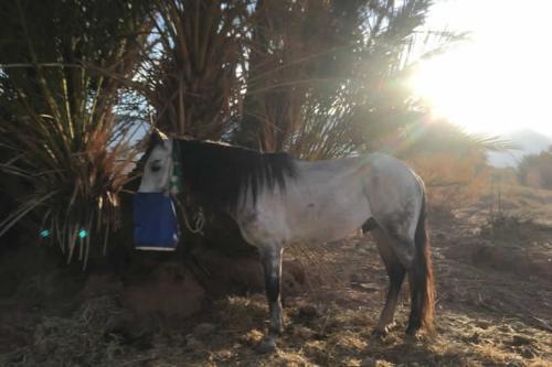 viaggioemozioneacavallo-marocco-chevauchèe-du-dèsert8