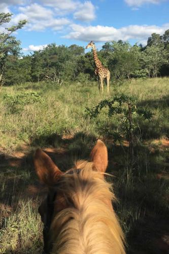 viaggioemozioneacavallo-sud-africa-11