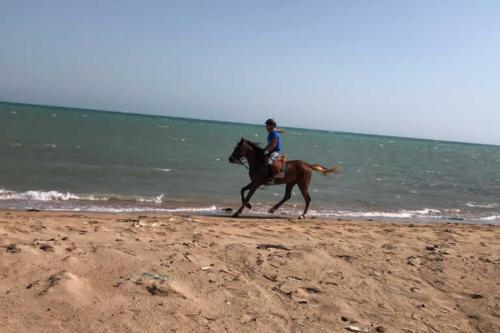 viaggio-emozione-a-cavallo-egitto-come-una-principessa-amazzone-12