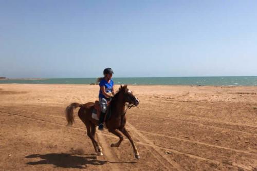 viaggio-emozione-a-cavallo-egitto-come-una-principessa-amazzone-13