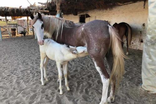 viaggio-emozione-a-cavallo-egitto-come-una-principessa-amazzone-4