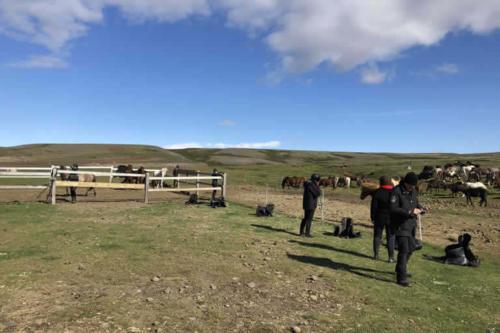 viaggio-emozione-a-cavallo-islanda-la-grande-traversata-kjolur-16