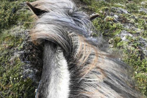 viaggio-emozione-a-cavallo-islanda-la-grande-traversata-kjolur-2-parte-22