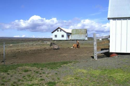 viaggio-emozione-a-cavallo-islanda-la-grande-traversata-kjolur-2-parte-9