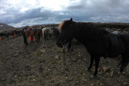viaggio-emozione-a-cavallo-islanda-preparazione-al-viaggio-3