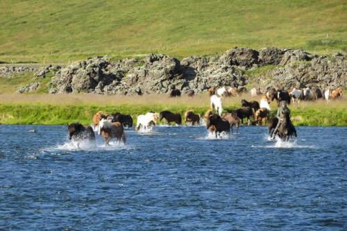 viaggio-emozione-a-cavallo-islanda-preparazione-al-viaggio-5